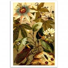 Botanical Poster - Cicadas