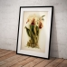 Botanical Poster - Cattleya Orchid