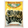Circus Poster - Ringling Brothers, Wonderful Elephant Brass Band