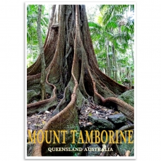 Australian Photographic Poster - Strangler Fig, Mt. Tamborine, Queensland