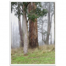 Melbourne Poster - Mt. Dandenong, Winter