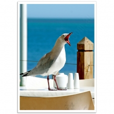 Photographic Poster - Hungry Impatient Seagull
