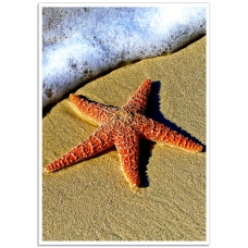 Photographic Poster - Starfish on the Beach