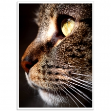 Pet Photographic Poster - Bengal Cat Portrait
