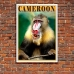 Wildlife Photographic Poster - Cameroon Mandrill