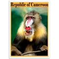Wildlife Photographic Poster - Mandrill