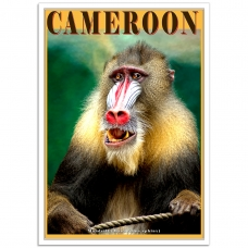 Wildlife Photographic Poster - Cameroon Mandrill